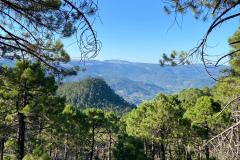 picarazos-villaverde-ruta-pinares-3