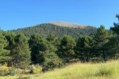 picarazos-villaverde-ruta-pinares-4