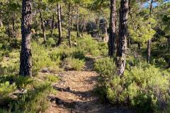 picarazos-villaverde-ruta-pinares-6