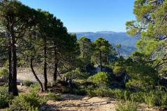 picarazos-villaverde-ruta-pinares-9